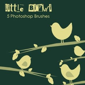 270-little-birdi