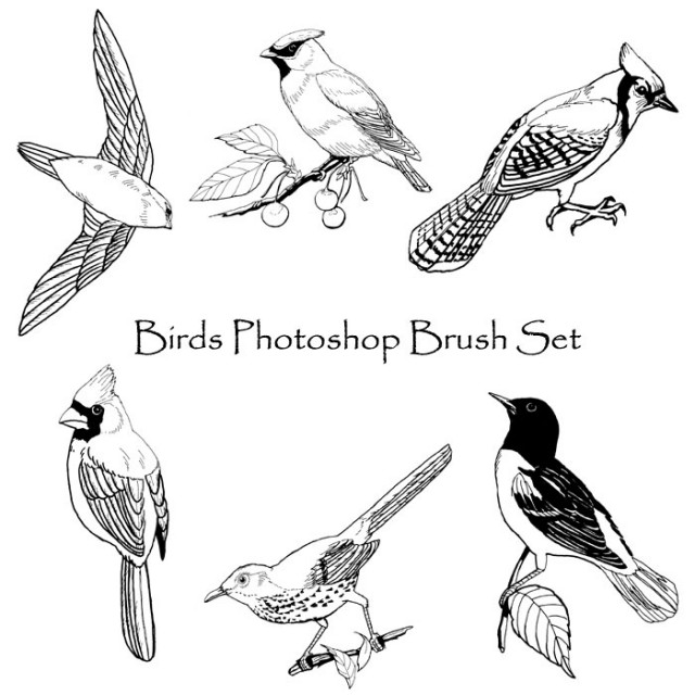 birds_photoshop_brush_set_by_phoenixwildfire